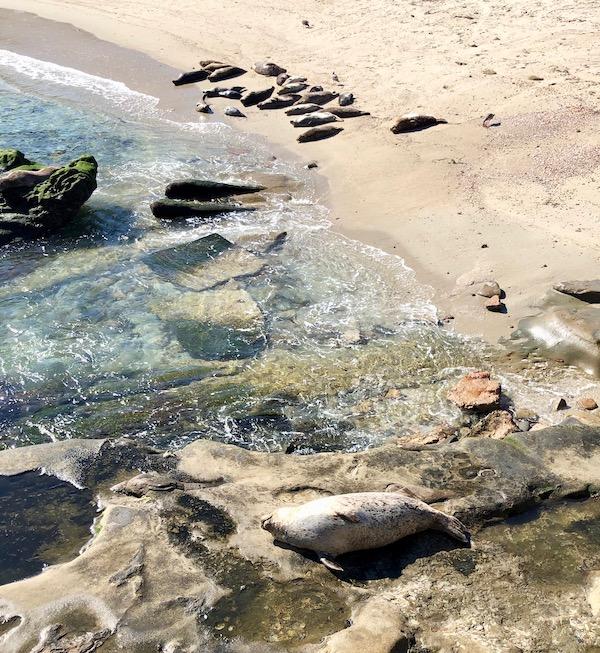 Childrens-Pool-Beach-Seals