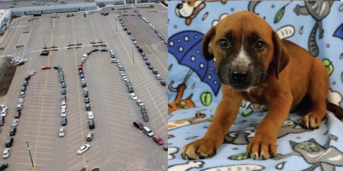 Half the country is lining up for food while the other half is lining up for puppies